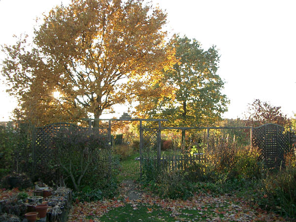 Haralds garten herbst - Herbst garten ...